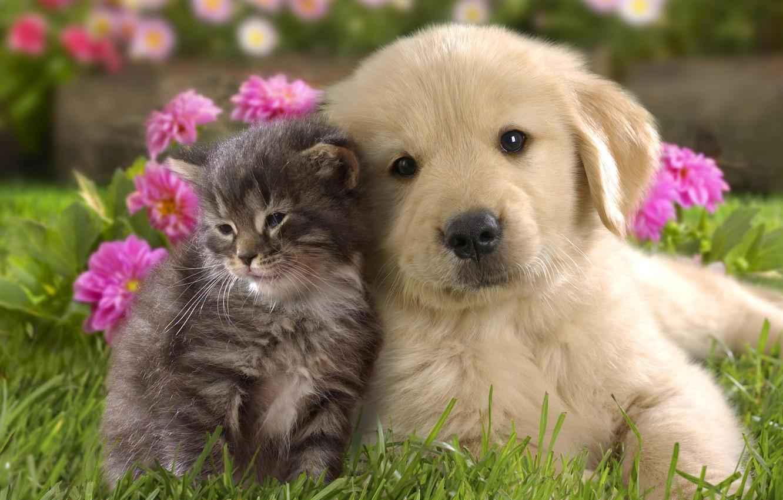Фото обои трава, цветы, котенок, фон, щенок, малыши, парочка