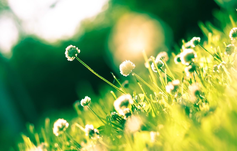 Обои цветы, grass. Цветы foto 14