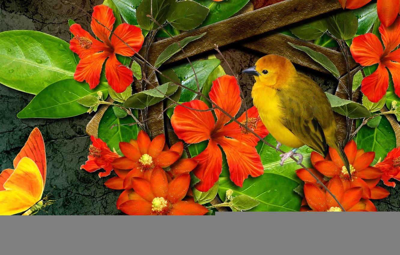 Фото обои цветы, коллаж, птица, бабочка