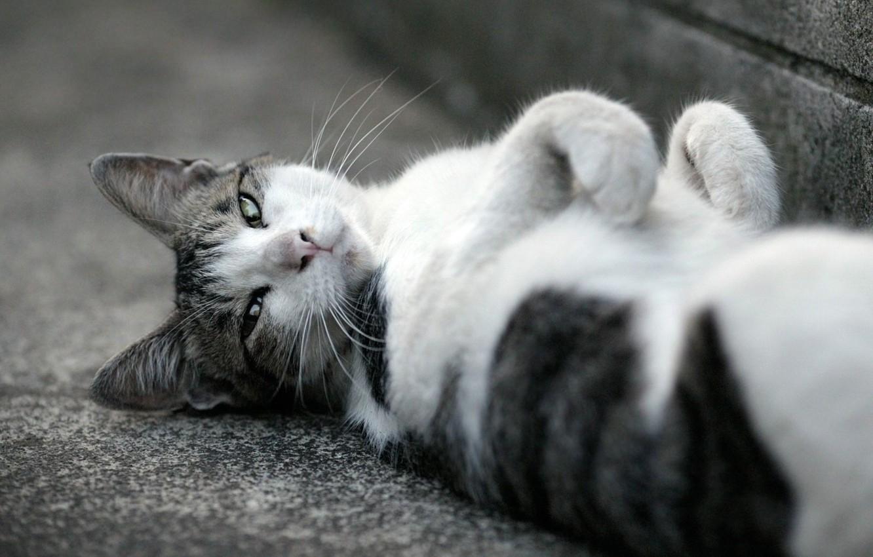 Фото обои кошка, асфальт, морда