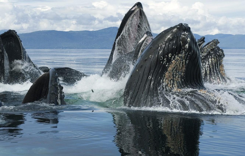 Фото обои animals, whales, sea