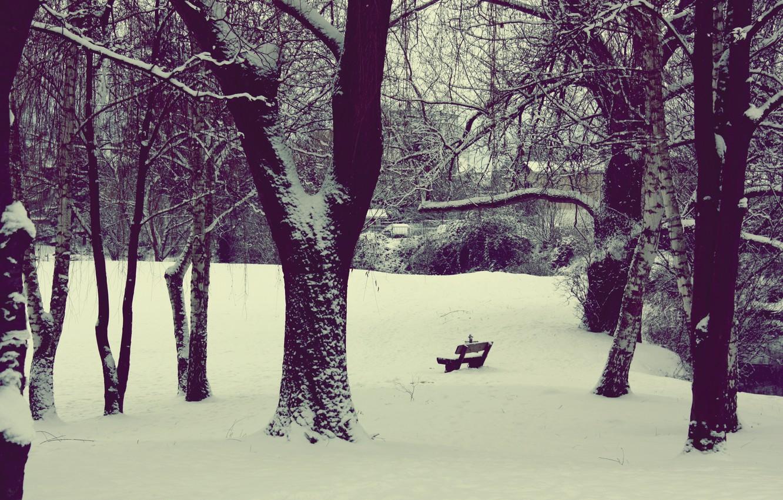 Фото обои зима, снег, природа, парк, двор