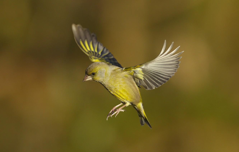 птички в полете картинки этом