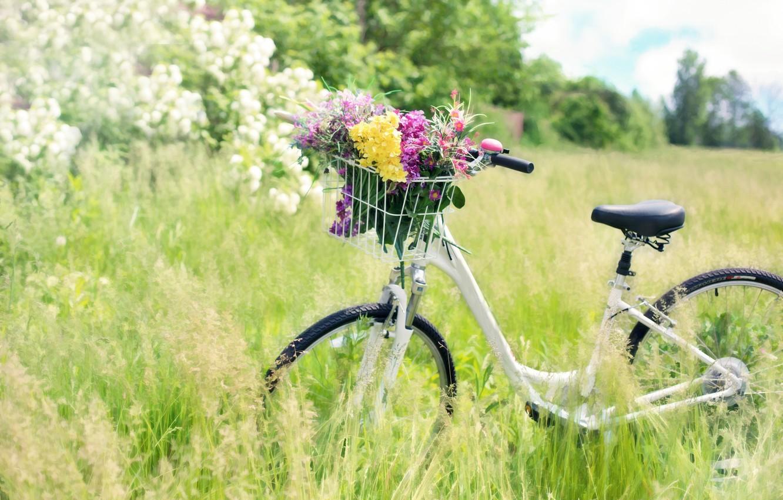 Фото обои лето, трава, цветы, природа, велосипед, корзина