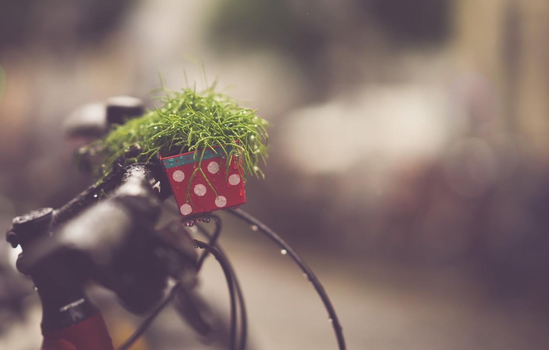 Фото обои велосипед, rain, звонок, боке, drops