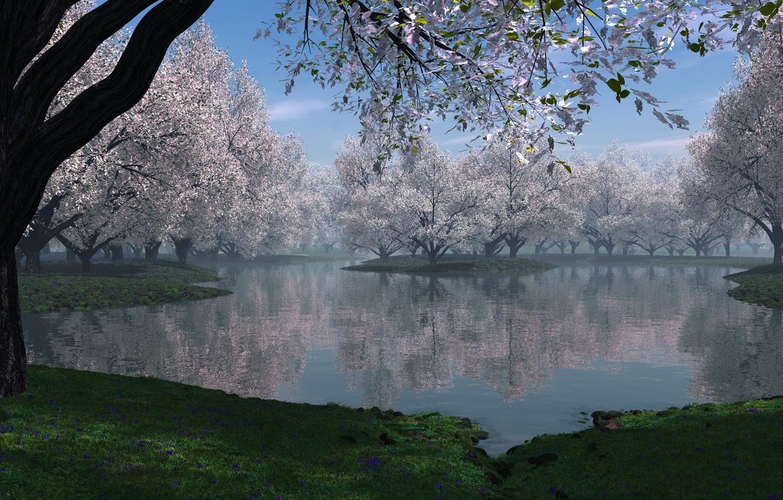 Фото обои трава, деревья, цветы, природа, озеро, весна, дымка, цветущие