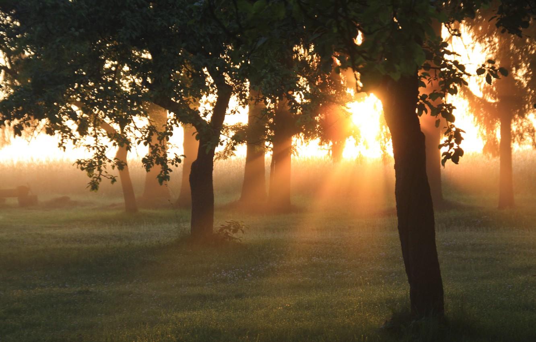 Фото обои зелень, лес, лето, трава, солнце, лучи, свет, деревья, природа, рассвет, утро, сад