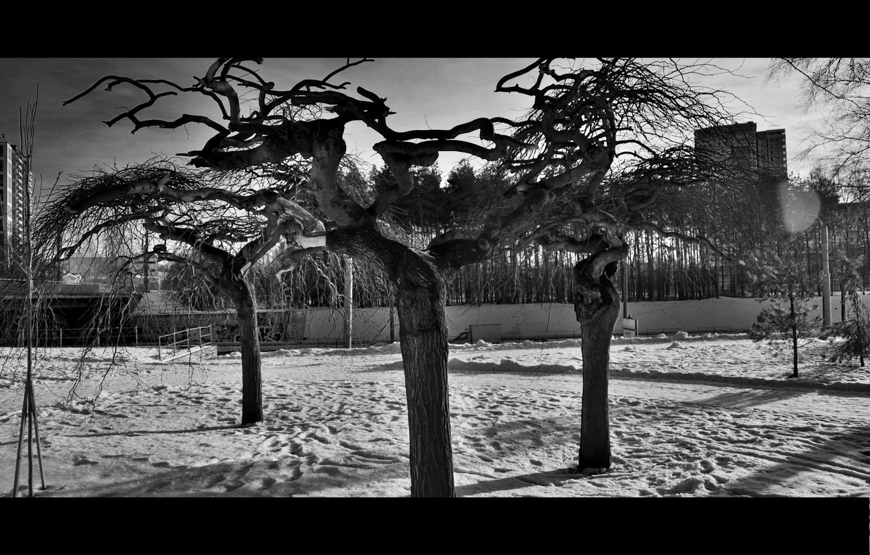 Фото обои деревья, город, кроны, черно-белые