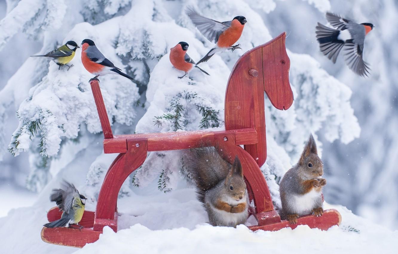 Фото обои лес, птицы, природа, лошадь, игрушка, ситуация, белка, toy, animals, nature, snow, birds, horse, синицы, лошадка, …