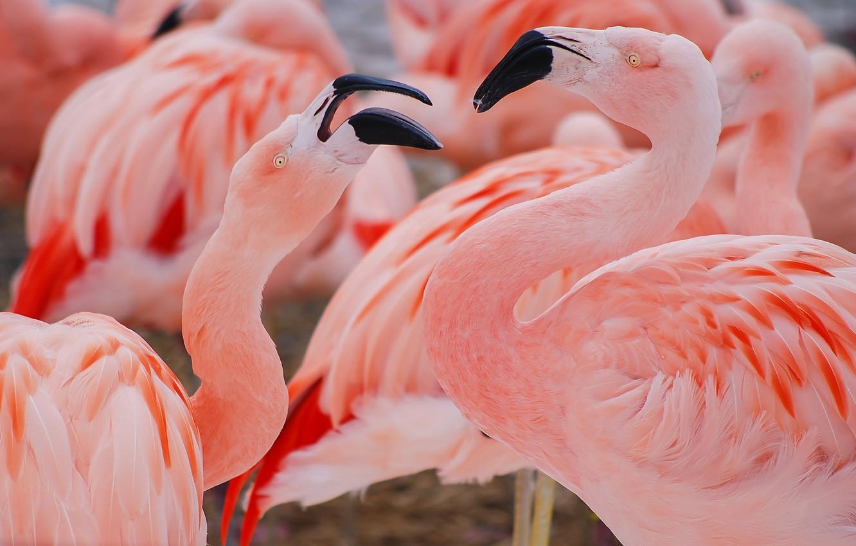 птенцы птица фламинго картинки избу