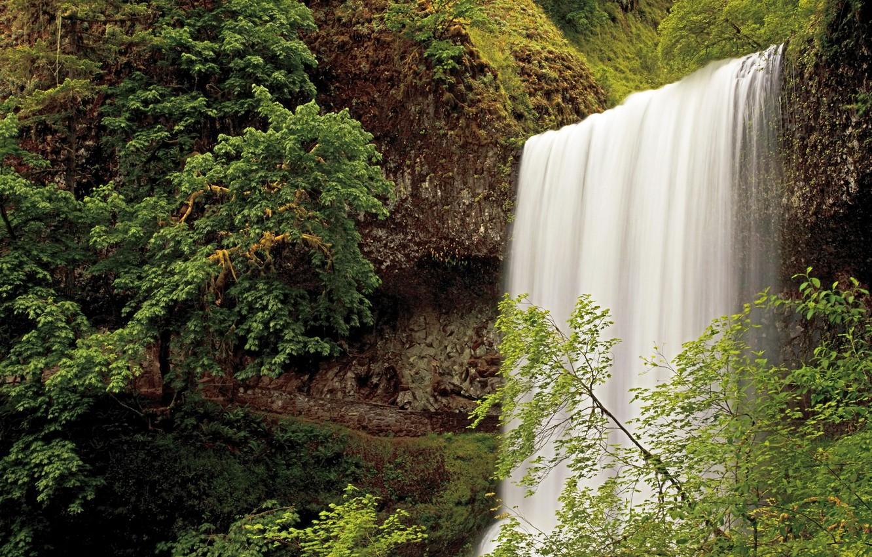 Фото обои лес, водопад, США, Oregon, Silver Falls