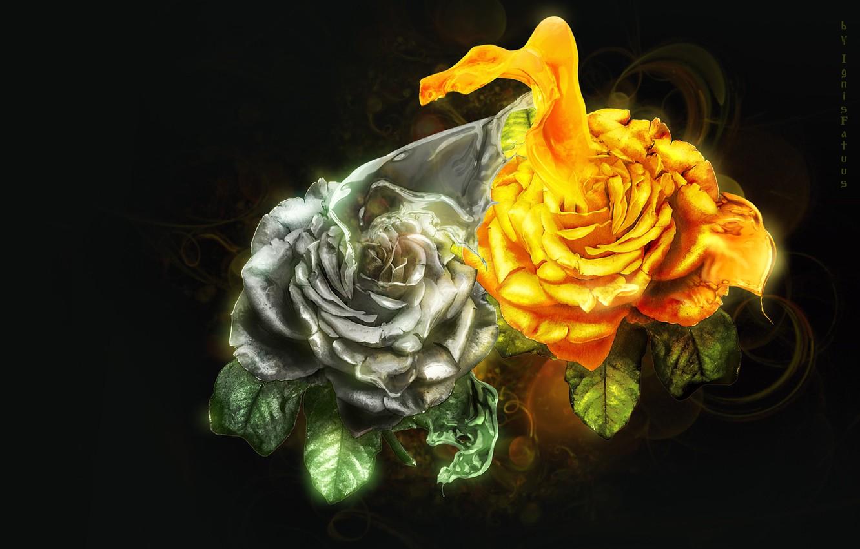 Фото обои розы, всплеск, silver, gold, art, splash, roses, фотоарт