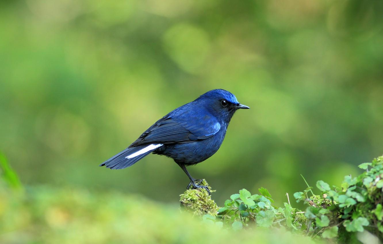 Картинки синяя птичка