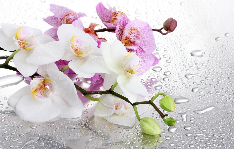 более, что картинки для широкоформатной печати орхидея краю