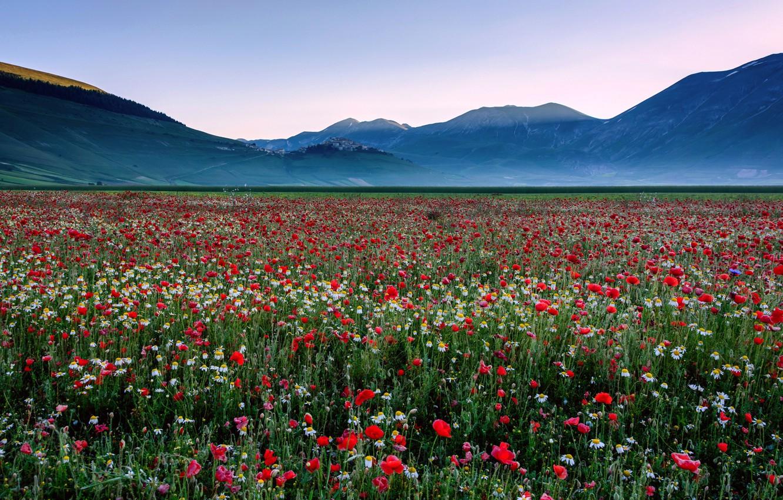 картинка поле цветов и горы подарков компания