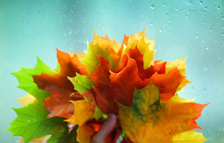 Фото обои осень, стекло, листья, вода, макро, желтый, красный, зеленый, фон, дождь, обои, рука, wallpaper, листочки, широкоформатные, …