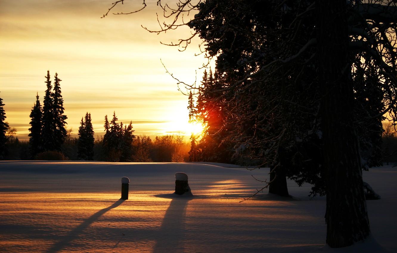 Фото обои зима, солнце, снег, деревья, ветви, вечер, Лес, пеньки, закат.