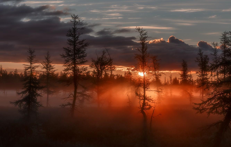 Фото обои солнце, лучи, деревья, туман, сумрак, Восход, зарево