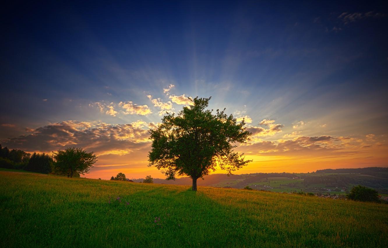 Фото обои зелень, лето, небо, трава, солнце, облака, лучи, пейзаж, цветы, свежесть, природа, дерево, рассвет, утро, склон, …