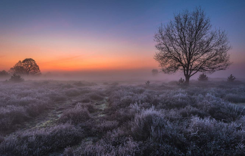 Фото обои иней, поле, свет, туман, дерево, рассвет, утро, Нидерланды, Голландия, Сент-Антони