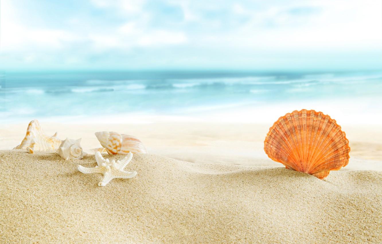 Фото обои beach, sea, sun, sand, seashells