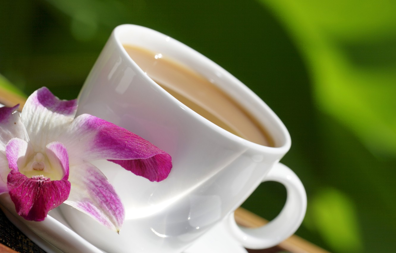 Фото обои цветы, еда, чашка, орхидея