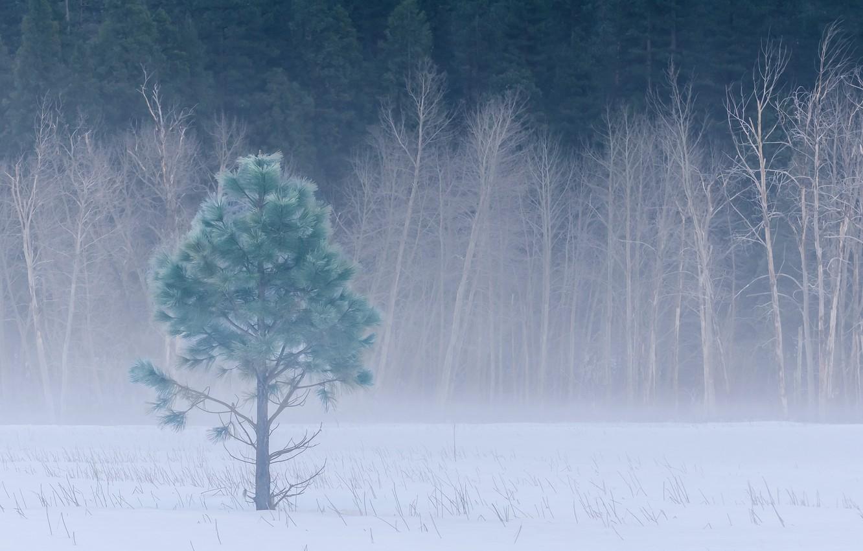 Обои сша, туман, национальный парк редвуд, калифорния. Природа foto 18