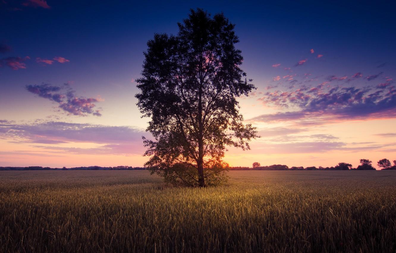 Фото обои зелень, поле, небо, листья, солнце, облака, деревья, пейзаж, природа, фон, дерево, widescreen, обои, растительность, wallpaper, …