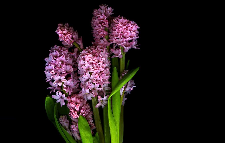 Фото обои свет, цветы, фон, обои, тень, лепестки, стебель