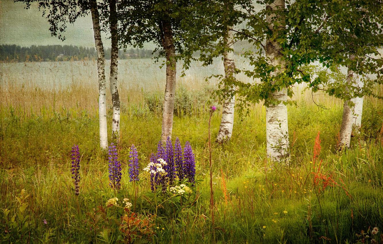 обои на рабочий стол август природа лес цветы вас уже