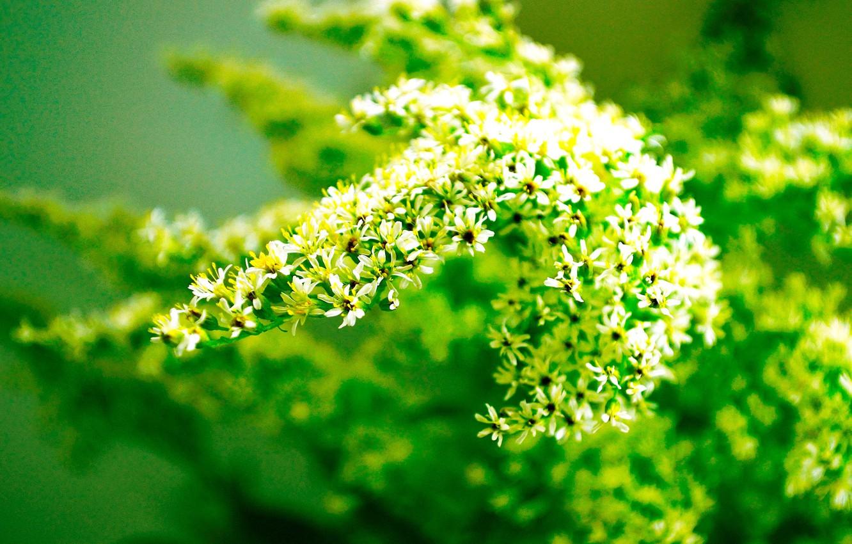 Фото обои цветы, природа, растение