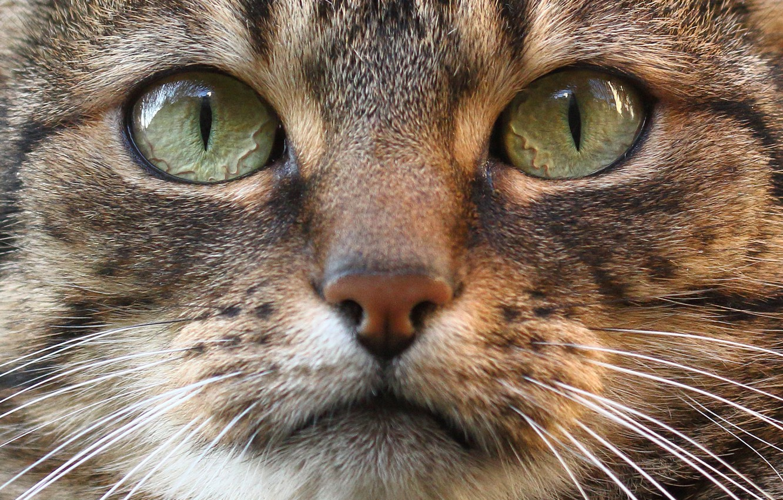 Картинки мордочки кота
