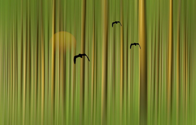 Фото обои птицы, стиль, фон, цвет