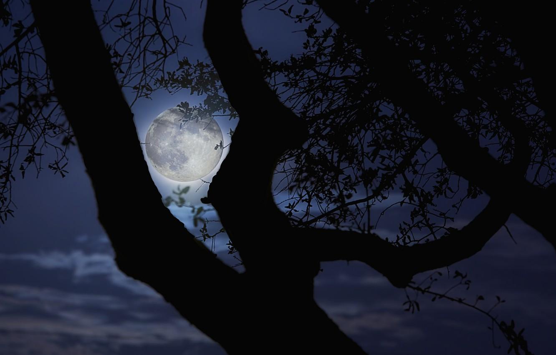 картинки деревьев ночью том году семья