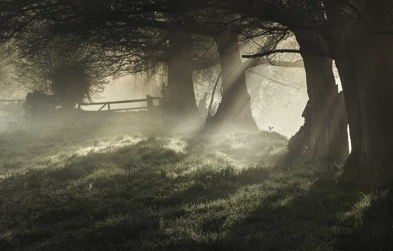сидит картинка мистическое утро посвящен