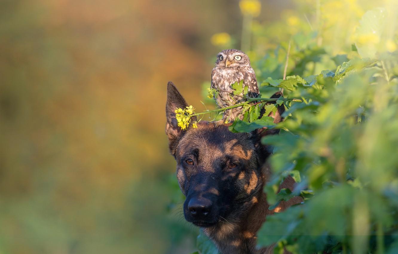 Фото обои листья, природа, животное, сова, птица, собака, пёс