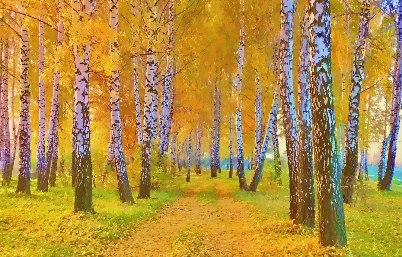 Обои тропа, осень, березы. Пейзажи foto 17