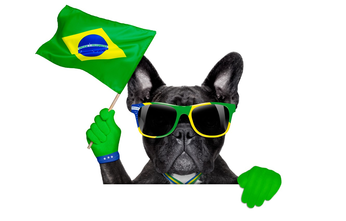 Фото обои собака, очки, logo, dog, football, flag, funny, cool, World Cup, Brasil, FIFA, 2014