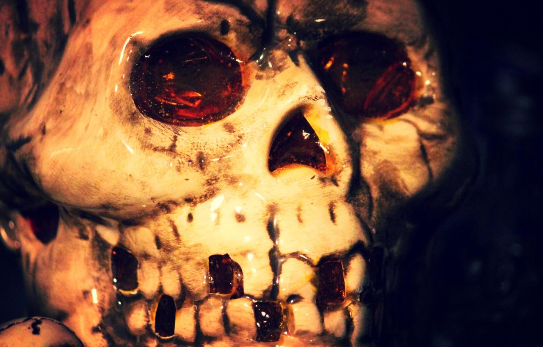 Обои череп, фон, makro. Разное foto 13