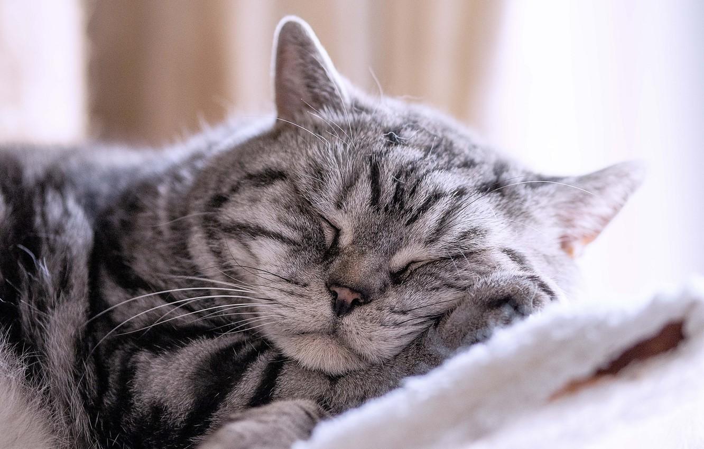 Фото обои отдых, кошак, котяра, котэ