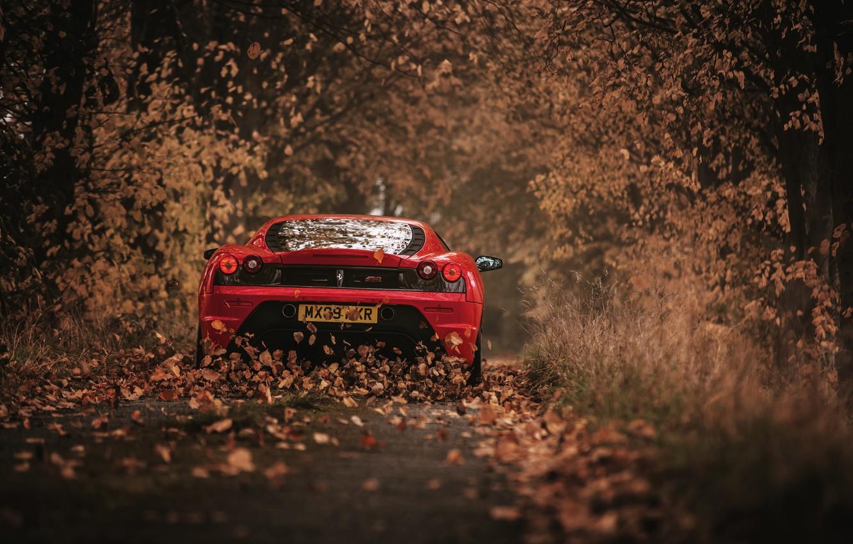 Фото обои осень, листья, 430 Scuderia
