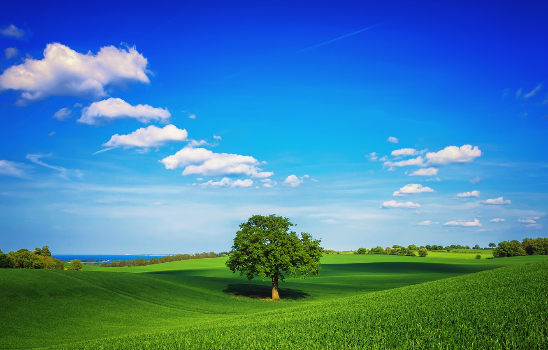 Фото обои зелень, поле, небо, трава, облака, дерево, весна