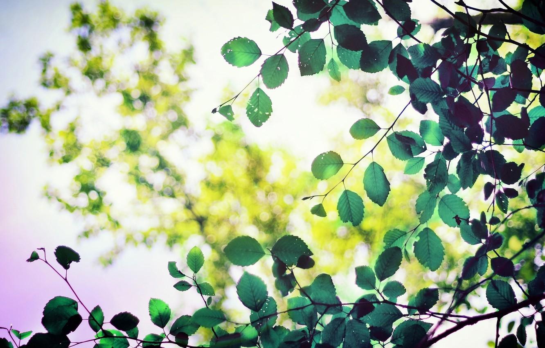 Фото обои листья, макро, деревья, зеленый, фон, дерево, green, widescreen, обои, листва, размытие, листик, wallpaper, форма, листочек, ...