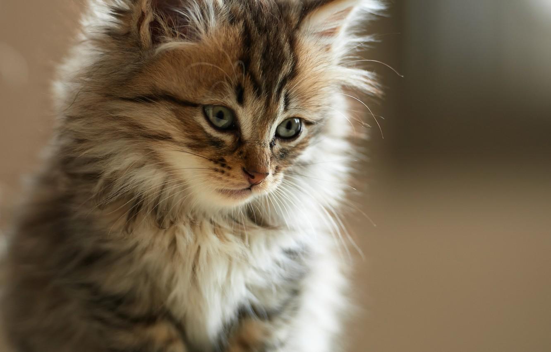 Обои кот, морда, котенок картинки на рабочий стол, раздел кошки ... | 850x1332