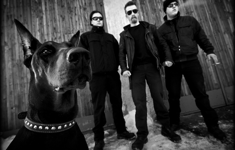 Фото обои Доберман, Хищник, Raubtier, шведская индастриал-метал-группа