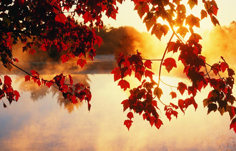 Фото обои осень, листья, солнце, лучи, свет, деревья, красота