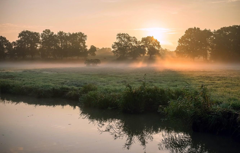 Фото обои трава, солнце, лучи, свет, деревья, туман, роса, река, весна, утро, камыш, солнца