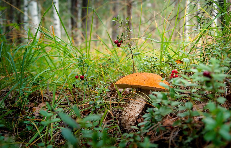 некоторых фото грибы в лесу на рабочий стол экс-участница скандальной