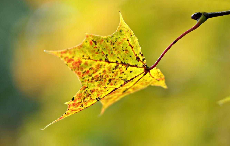 Фото обои осень, макро, лист, размытость
