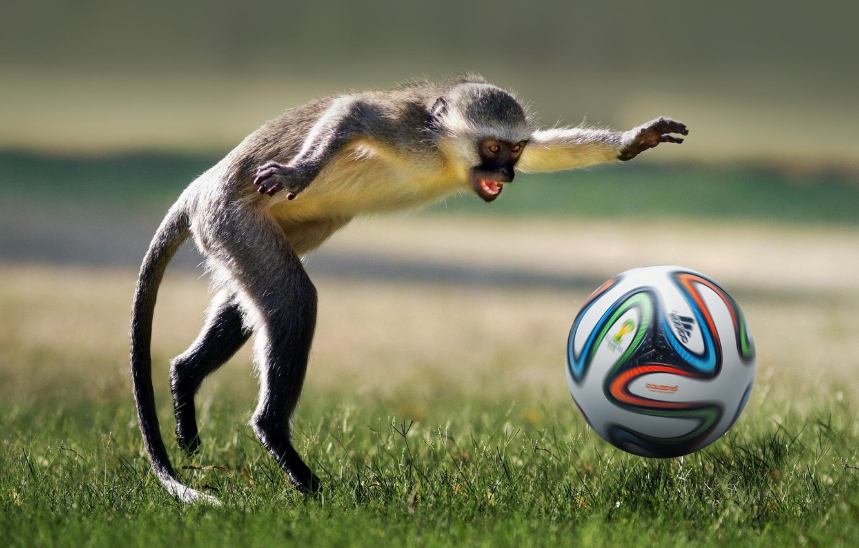 Фото обои животное, футбол, игра, мяч, обезьяна, game, monkey, football, ball, playing